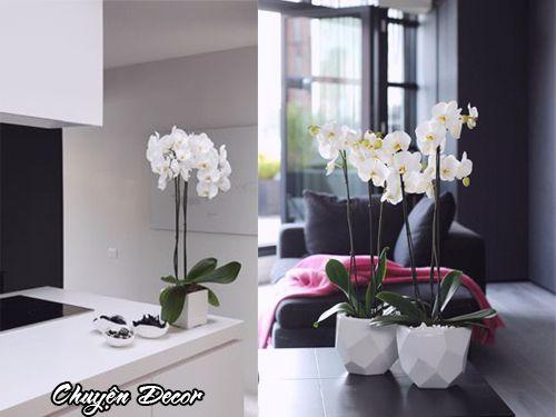 Hoa giả phong lan trang trí phòng ăn