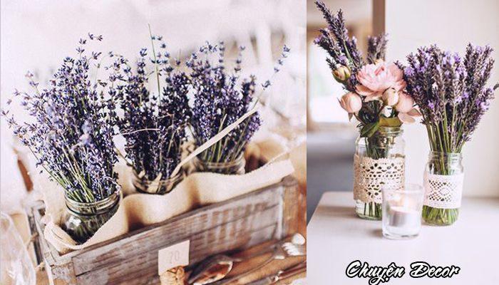 hoa-oai-huong-lavender