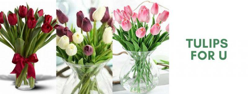 Hoa tulip đẹp trang trí